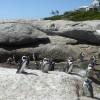 Que faire à Cape Town avec de jeunes enfants?