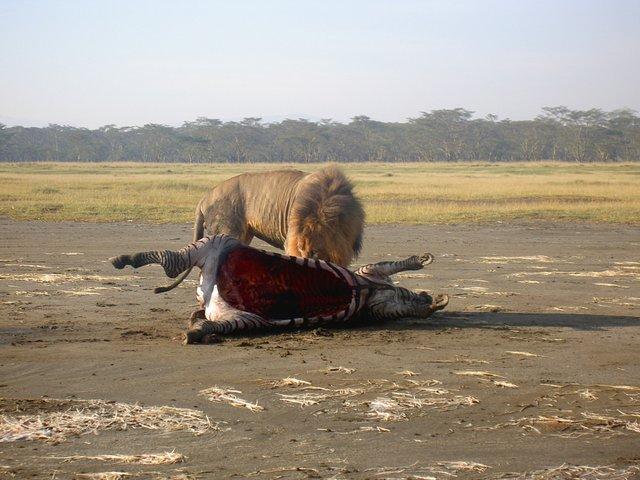 Lac Nakuru Kenya
