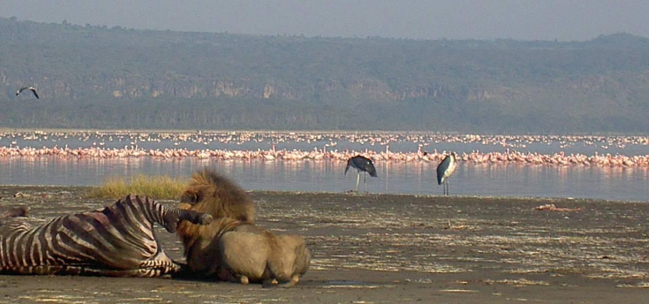 Safari au Kenya