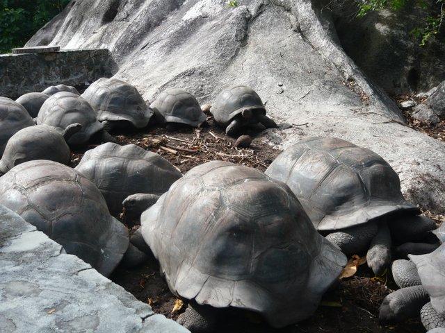tortues géantes seychelles