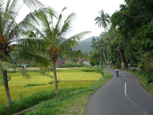 Moto Bali
