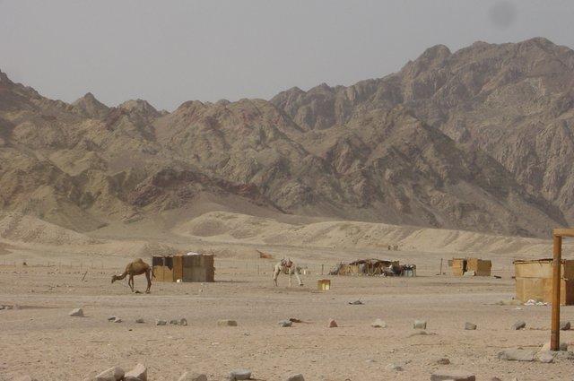 Dahab-bedouin