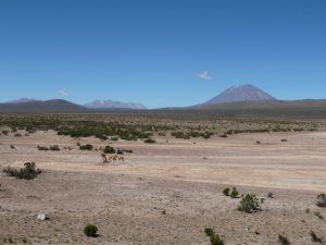 Splendeur du Canyon de Colca et d'Arequipa-Pérou!