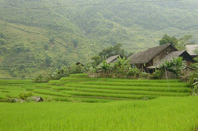 rizieres sapa
