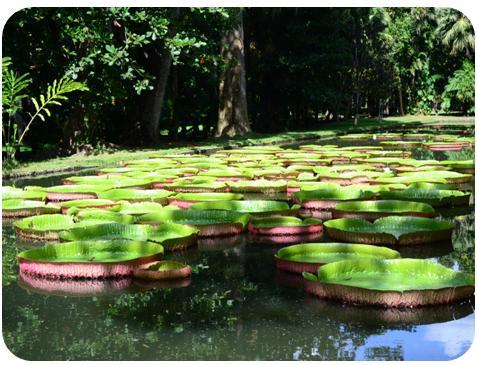 jardin de pamplemousses