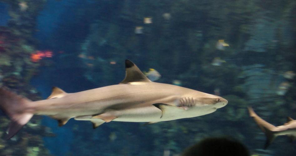 visiter-aquarium-barcelone