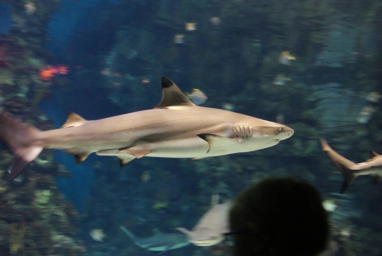 Visiter l'Aquarium de Barcelone